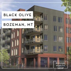 Black-Olive - Bozeman, MT